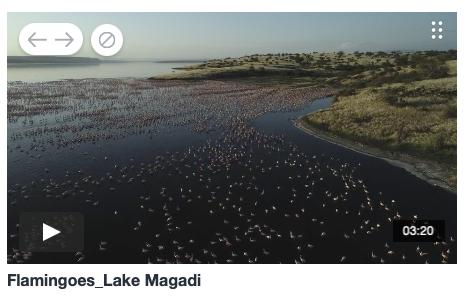 Flamingos Lake Magadi